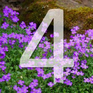 4 plantes pour murets