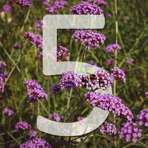5 plantes vivaces pour la sécheresse et le plein soleil