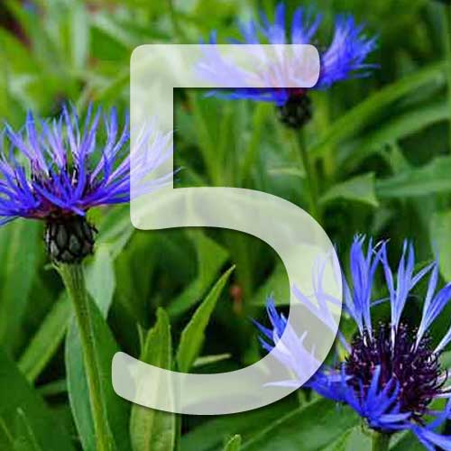 5 plantes bleues pour le jardin