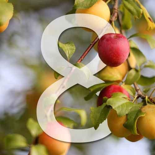 8 pruniers pour le jardin