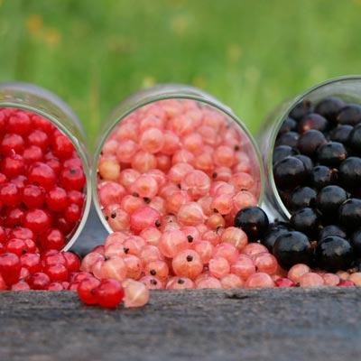 Route Groseilles rouges Groseilles roses Groseilles noires Pot en verre Herbe