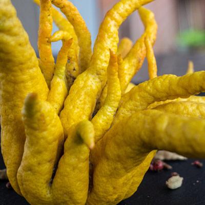 Main de Bouddha Citrus Medica Agrume Jaune
