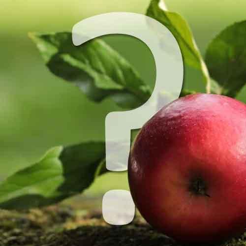 combien de temps pour une première récolte de fruits?