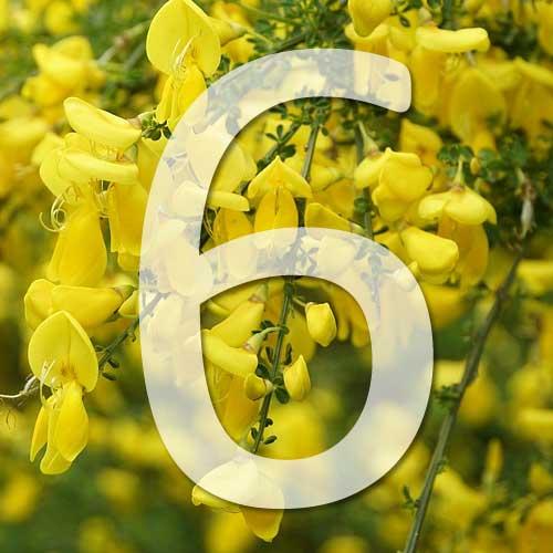 6 pmus belles plantes jaunes pour le jardin