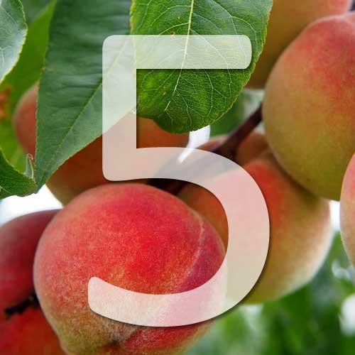fruitiers qui poussent vite