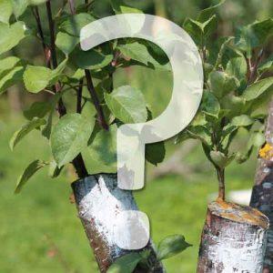 greffe fruitiers comment faire?