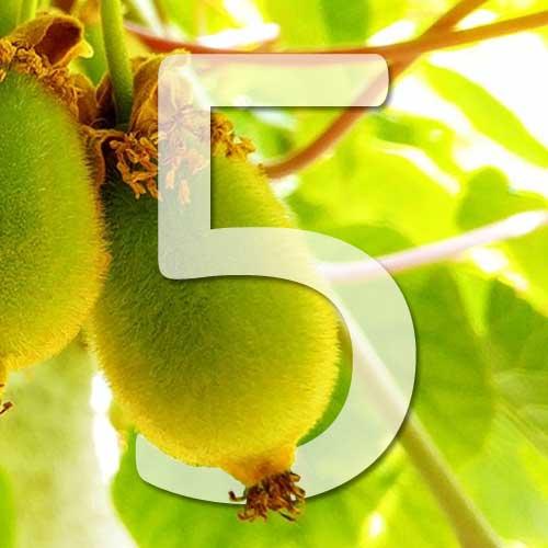5 variétés de kiwi