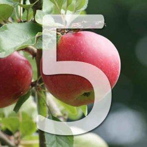 5 variétés de pommiers