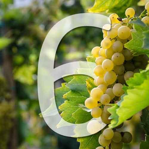 6 variétés de raisins blancs
