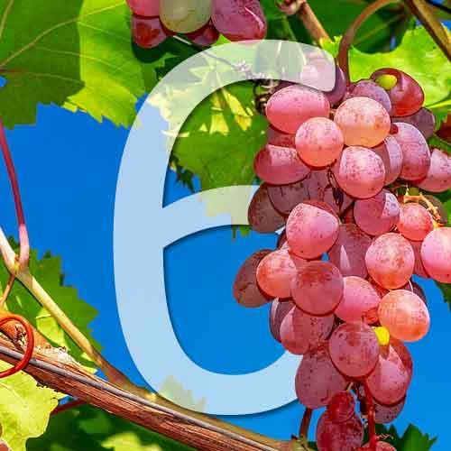 6 variétés de raisins roses à cultiver au jardin