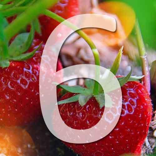 6 variétés de fraisiers
