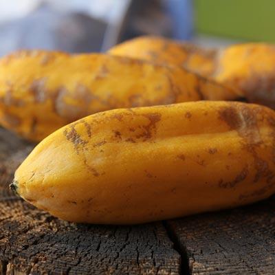 Récolte Fruits exotiques Babaco Fruits jaunes