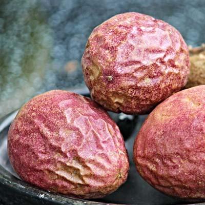 Fruits de la passion rouges Récolte